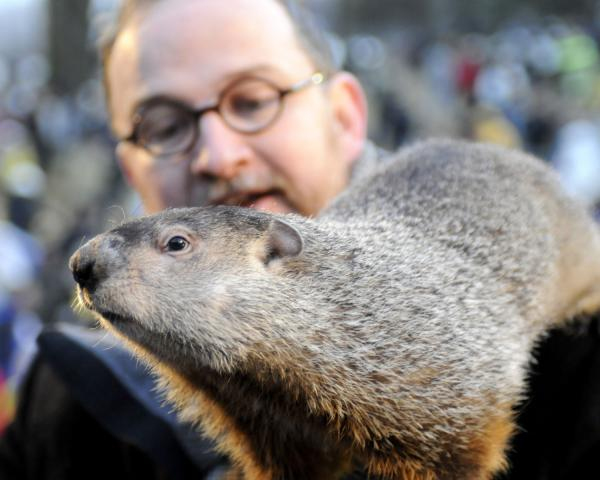125th Anniversary of Groundhog Days in Punxsutawney, PA. Punxsutawney Phil